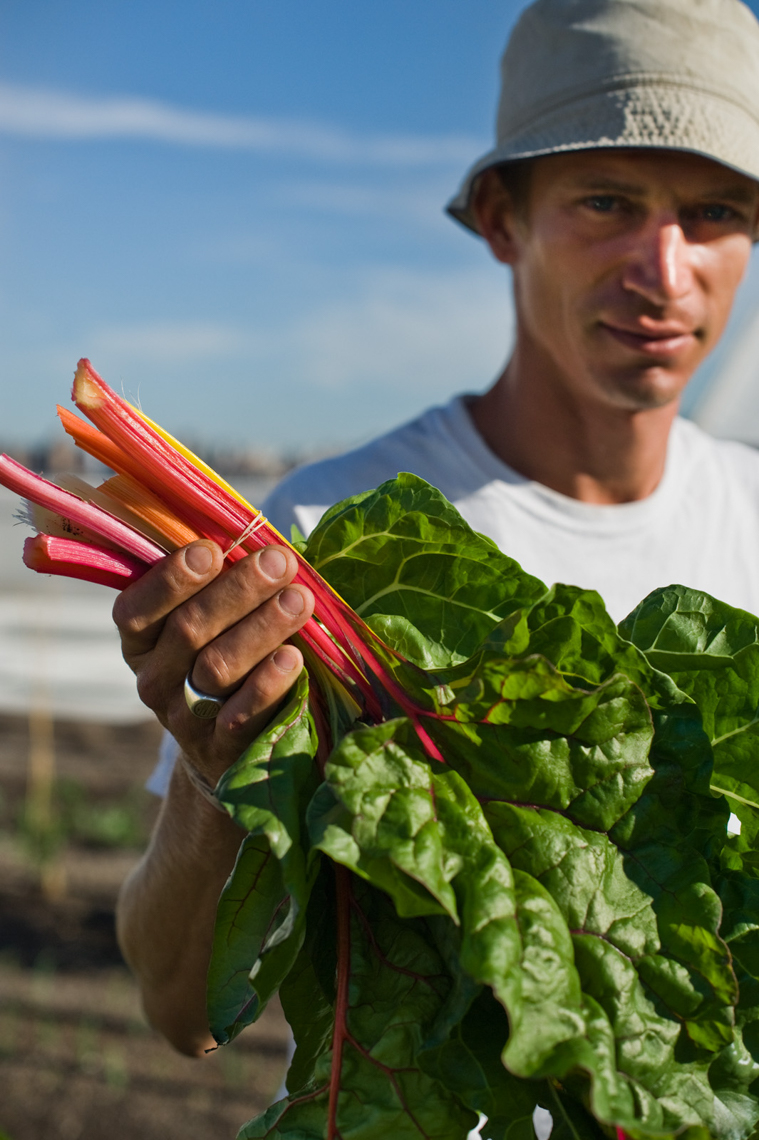 Farm Manager, Matt Jefferson holding Rainbow Chard, Brooklyn Gra