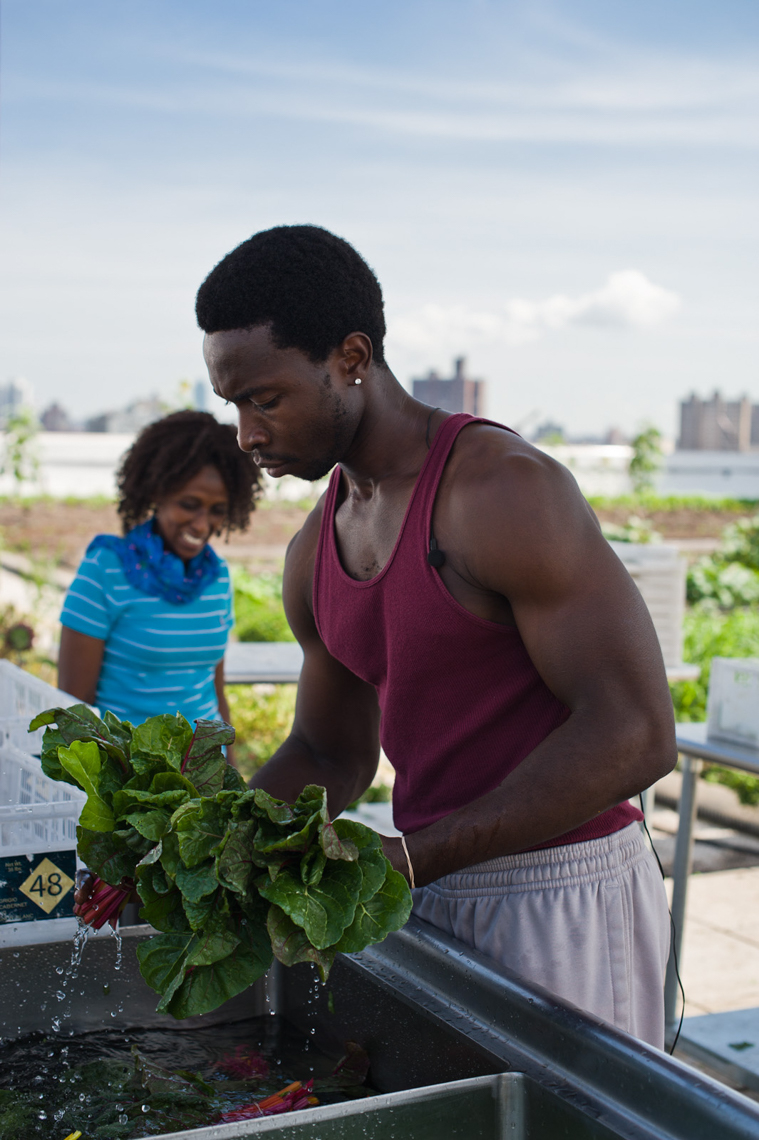 Farmers washing Rainbow Chard, Brooklyn Grange Rooftop Farm, The